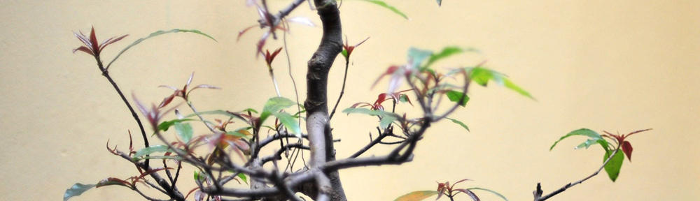 Gryningsräd